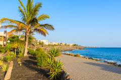 Palm trees and hotel buildings along coastal promenade Royalty Free Stock Images
