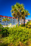 Palm trees and a hotel at Tybee Island, Georgia. Stock Photography