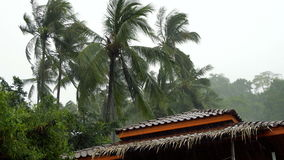 Palm Trees and House Roof Under Tropical Rain stock video footage