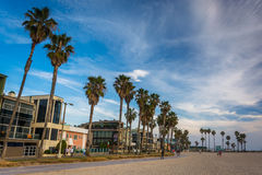 Palm trees and houses along the beach, in Venice Beach  Stock Image