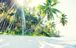 Palm Trees on Idyllic Beach Royalty Free Stock Image