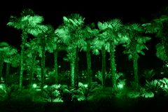Palm trees illuminated with green light Royalty Free Stock Photography