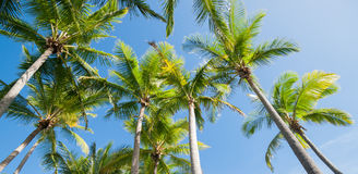 Palm trees image. Royalty Free Stock Photo