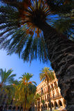 Palm Trees In Barcelona Plaza Royalty Free Stock Photo