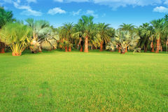 Palm Trees In Tropical Garden Stock Image