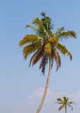 Palm Trees in India Stock Photos