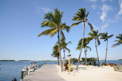 Palm Trees on Islamorada Stock Photography