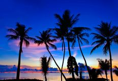 Palm trees on the island of Koh Samui during Blue Hour. Just after sunset royalty free stock photos