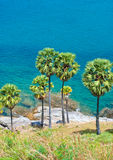 Palm trees on the island of Phuket Stock Photo
