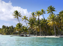 Palm trees on island in  sea Stock Photo