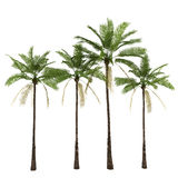 Palm trees isolated on white Royalty Free Stock Photography