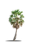 Palm trees isolated Stock Image