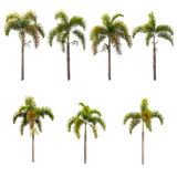 Palm trees isolated on white Royalty Free Stock Images
