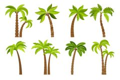 Palm trees isolated on white Stock Photos