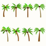 Palm trees isolated on white background. Diversity of trees set on white stock illustration