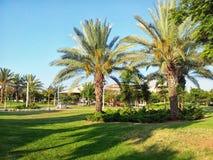 Palm trees in Israeli park Stock Photos