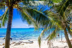 Palm trees in Johnny Cay, Island of San Andres, Colombia in a beautiful beach background.  Stock Images