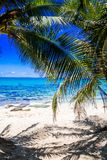 Palm trees in Johnny Cay, Island of San Andres, Colombia in a beautiful beach background.  Royalty Free Stock Photo