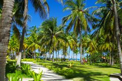 Palm trees in Johnny Cay, Island of San Andres, Colombia.  Royalty Free Stock Image