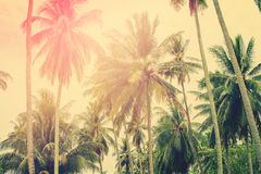 Palm Trees Jungle Toned Landscape Tropical View Stock Photography