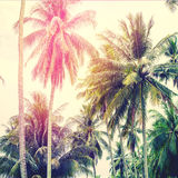 Palm Trees Jungle Toned Landscape Tropical View Stock Images