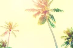 Palm Trees Jungle Toned Landscape Tropical View Royalty Free Stock Images