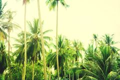 Palm Trees Jungle Toned Landscape Tropical View Stock Image