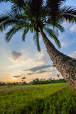 Palm trees at jungles border Stock Images