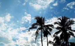 Palm trees kerala Stock Images