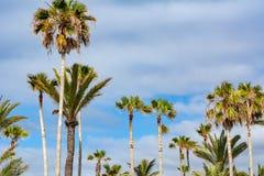 Palm trees in Lago Martianez open air swimming pool complex, Puerto de la Cruz, Tenerife, Canary islands, Spain royalty free stock image