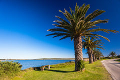 Palm Trees Lagoon Roadside. Palm trees alongside and wide river lagoon with green grass roadside and a chair to sit. Horizontal color photo image captured with Royalty Free Stock Image