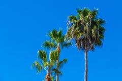 Palm trees in Laguna Beach. California royalty free stock photos