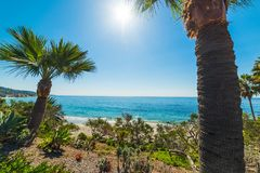 Palm trees by Laguna Beach shore. California, USA Royalty Free Stock Images