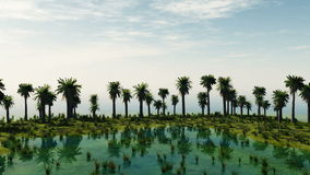 Palm trees at laguna island. sunny day stock video footage