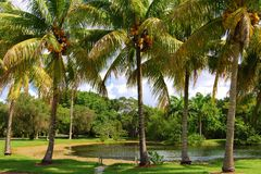 Palm Trees by a Lake Stock Image