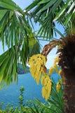 Palm trees on lake lugano Royalty Free Stock Photos