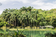 Palm Trees and Lake Stock Images