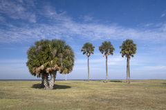 Palm trees  on lakeshore under blue sky Stock Photos