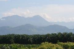 Palm trees landscape Royalty Free Stock Photo