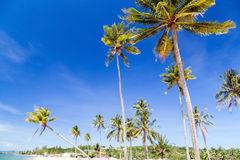 Palm Trees landscape beach Royalty Free Stock Image