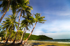 Palm Trees landscape Royalty Free Stock Images