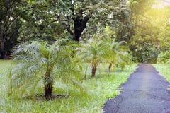 Palm trees lane. Mauritius Stock Photos