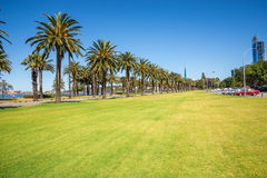 Palm trees in Langley Park along Swan River in Perth City Stock Photography