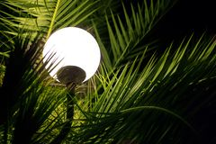 Palm trees and lantern at night. Green palm trees illuminated by a lantern. Round lantern sinking in the branches of the night palm trees stock photo