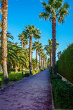 Palm Trees In Lapineda. Street with palm trees and blue sky in Lapineda (Spain Royalty Free Stock Photos