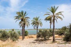 Palm trees. At Larnaca Salt Lake Stock Photos
