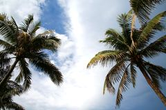 Palm Trees in Late Afternoon Sun Royalty Free Stock Photo