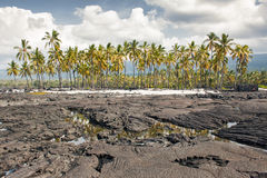 Palm trees on a lava beach panoramic view Royalty Free Stock Photography