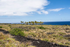 Palm trees on the lava flow, Hawaii Royalty Free Stock Image