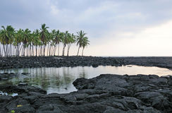 Palm trees in the lava by the ocean Stock Images
